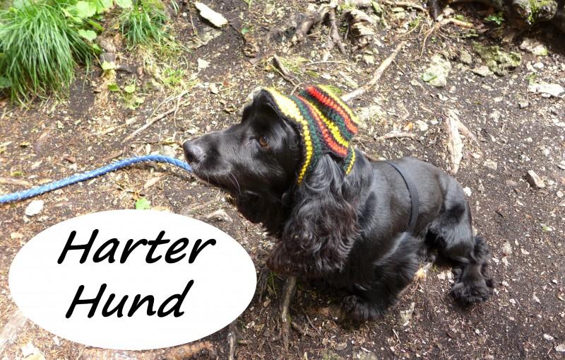 Kletterausrüstung Für Hunde : Harter hund